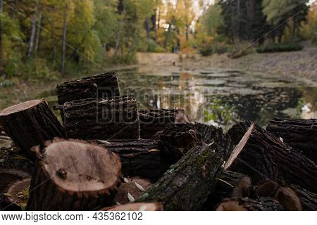 Wooden Blocks Lie In A Heap By The Lake In The Park. Arboretum Of Barnaul. Selectiv Focus. The Sawn