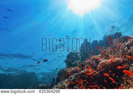 Sun Beams Shinning Underwater On The Tropical Coral Reef. Ecosystem And Environment Conservation Con