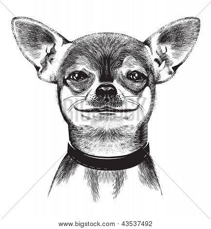 Dog Chihuahua Illustration