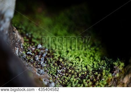 A Close Shot Of Green Moss On A Rock. The Texture Of The Surface Of Stones And Trees In Nature, Smal
