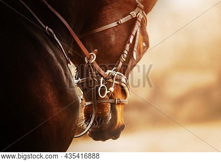 Portrait Of A Beautiful Bay Horse With A Leather Bridle And A Snaffle On Its Muzzle, Which Jumps On