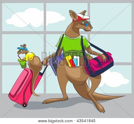 Kangaroo Travels With A Family