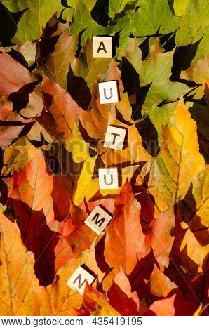 Lettering Autumn Multicolored Maple Leaves Background With Copy Space. Selective Focus On Inscriptio