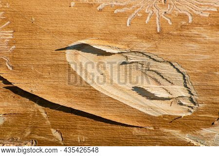 Picture Of Wood Without Bark With A Stuck Ax. Texture Needed For Ecologists