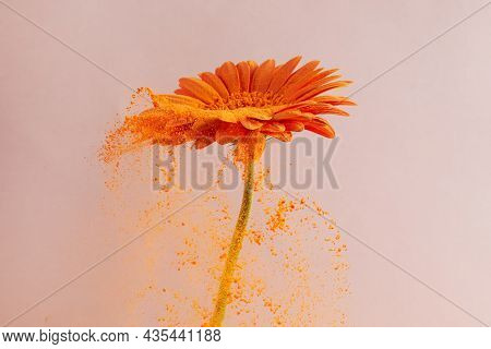 Flower With Orange Powder On Pink Background. Explosion Cloud. Colorful Dust Explode. Power Energy.