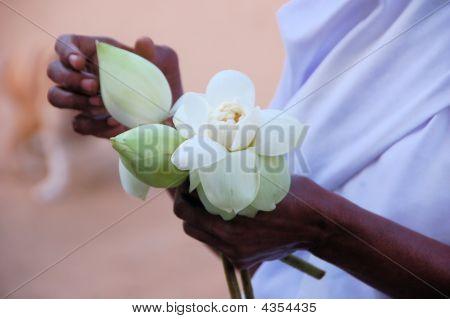 Opening Of Lotus