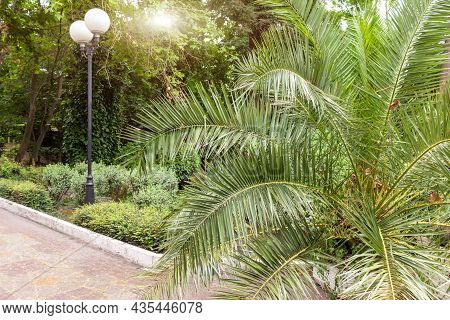 A Path In A Tropical South Park With Green Palms And A Lantern, Torch, Travelling And Journey Concep
