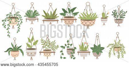 Set Of Plants In Hanging Pots. Houseplant Hang On Rope, Decorative Indoor Plants, Macrame Flower Pot
