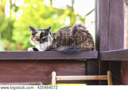 A Tricolor Motley Cat Sits On The Railing Of A Country House