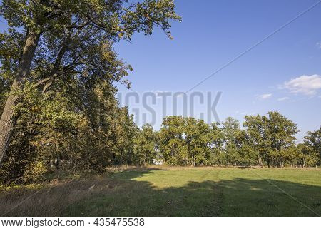 Autumn Landscape Beautiful Colorful Leaves On Trees In An Oak Grove On A Sunny Day.