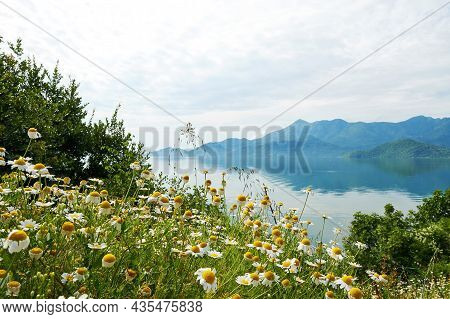 The Tranquil Landscape With Mountains And Skadar Lake And Chamomile Foreground. Morning Fog Over The