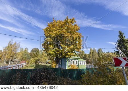 A Large Yellow Tree Near An Old Village House. Rural Autumn Landscape With An Old Maple Tree. Bright
