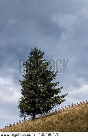 Lonely Spruce On The Slope And Sky Background