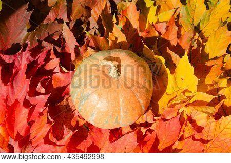 Selective Focus Color Gradient Surface Pumpkin On Background Of Autumn  Foliage. Autumn Season Conce