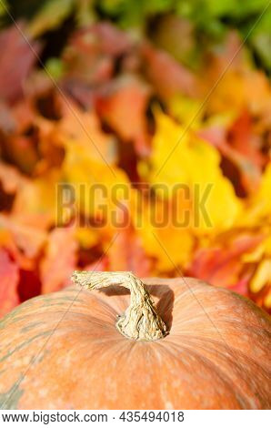 Selective Focus Pumpkin On Background Of Color Gradient Autumn Foliage. Autumn Season Concept With C