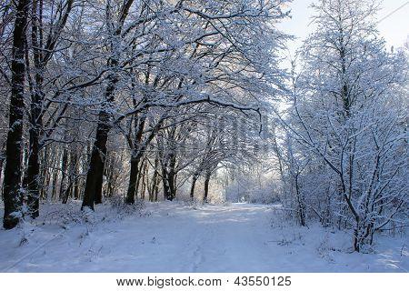 Bright Winter Landscape