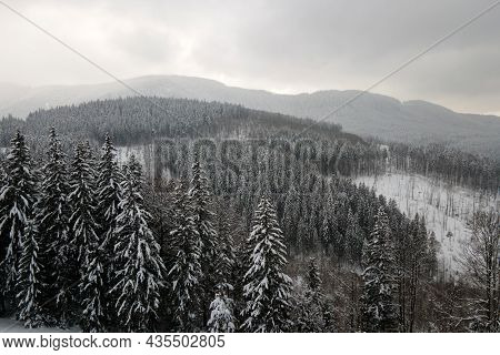 Aerial Foggy Landscape With Evergreen Pine Trees Covered With Fresh Fallen Snow After Heavy Snowfall