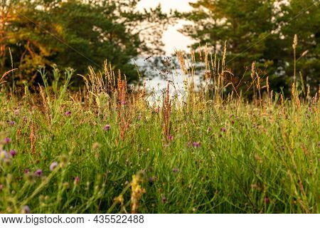 Low Light At Field Of Flowers Near Sea. Close Up View To Summer Pasture Vegetated By Grasses, Herbs,