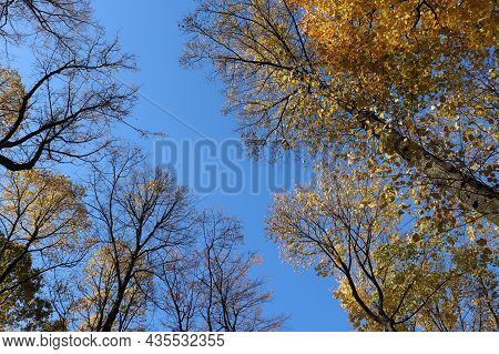 Blue Autumn Sky And Trees With Yellow And Golden Foliage. Low Angle View.