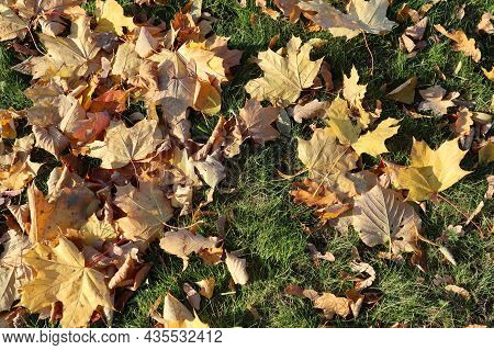 Autumn Yellow And Golden Leaves On The Grass. High Angle View. Leaves As Background.
