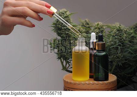 Marijuana Oil, Cbd Recreation. Cosmetic Bottle On Fresh Cannabis Shrub Background, Close-up. Alterna