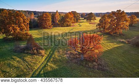 Aerial View Of Oak Trees In Autumn, Shadow On Meadow. Country Road On Green Fields.