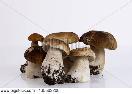 Cepes, Forest, Wild, Mushrooms, Boletus Edulis, On A White Background. Copy Space.