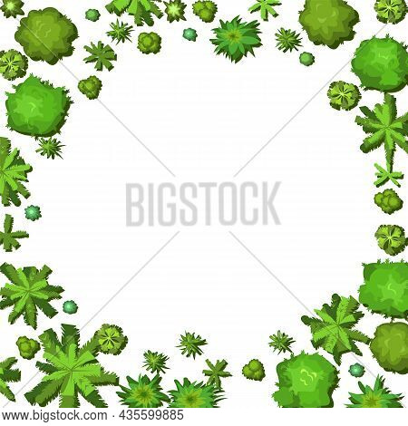 Glade In The Forest. Frame With Place For Text. Trees And Shrubs. View From Above. Plant Landscape.