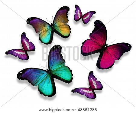Many different butterflies, isolated on white background poster