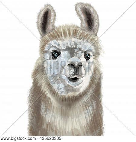 Watercolor Portrait Of Alpaca. Realistic Illustration. Cute Llama