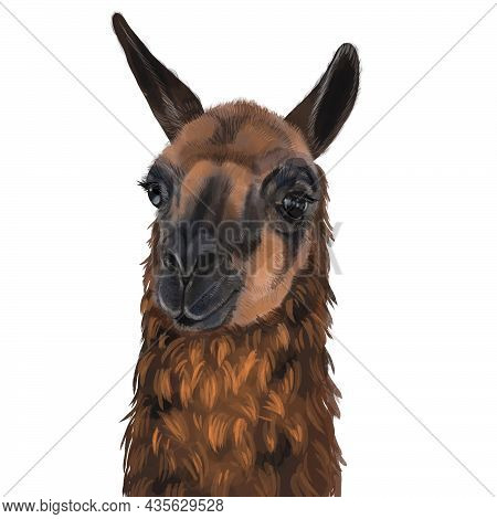 Watercolor Portrait Of The Lama. Alpaca Illustration. Isolated On A White Background