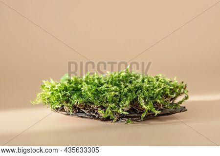 Natural Podium For Organic Cosmetic Product. Green Moss Isolated On Pastel Background With Shadow. S