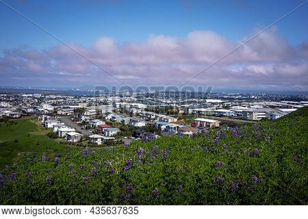 Hafnarfjordur, Iceland - July 17, 2021: A City And Coastline Panorama, Viewed From A Hill. Lupine Fl