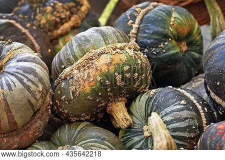Green Colored Turban Squash With Warts On Skin On Pile
