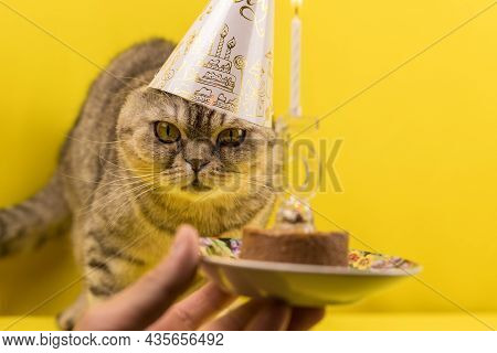 Congratulations On Your Birthday, A Cat In A Festive Cap With Cake. Yellow Background. Merry Kitty,