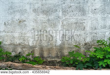 Texture Of Abstract Old White Brick Cement Wall In Industrial Building And Green Grass Plants Backgr