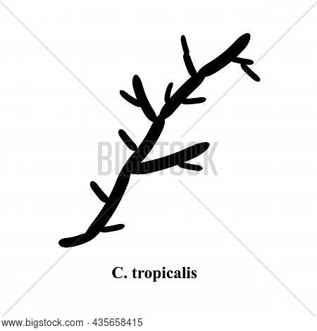 C. Tropicalis Candida. Pathogenic Yeast-like Fungi Of The Candida Type Morphological Structure. Vect