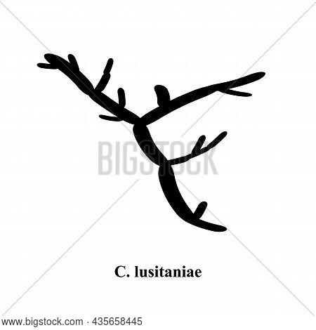 C. Lusitaniae Candida. Pathogenic Yeast-like Fungi Of The Candida Type Morphological Structure. Vect