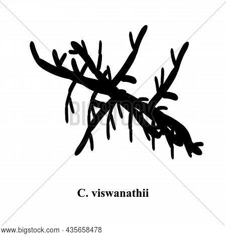 C. Viswanathii Candida. Pathogenic Yeast-like Fungi Of The Candida Type Morphological Structure. Vec