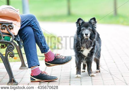 A Sad Shaggy Dog With Sad Eyes Guards The Owner Sitting On A Bench In A City Park.