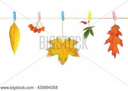 Close-up Of Pigmented Autumn Leaves And Berries Hanging On A Washing Line Pinned With Colorful Cloth