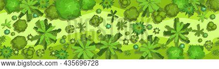 Jungle Forest Top View. Horizontal Seamless Composition. Overgrown Rainforest. Landscape. Cartoon St