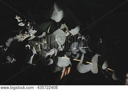 A Ray Of Light Falls On A Basket Of Freshly Cut Branches Of Eucalyptus Baby Blue Plant At The Greek