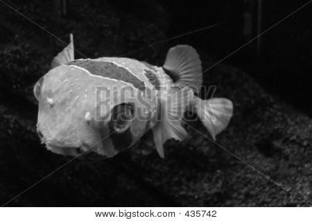 fish in black&white poster
