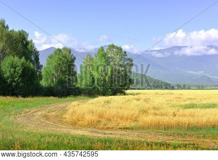 The Agricultural Field Sang On A Sunny Day Under A Blue Sky. Siberia, Russia