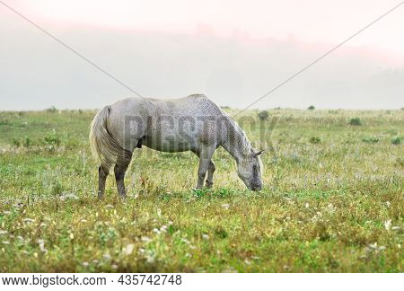 A Pet In The Morning Grass On A Blurry Background. Altai, Siberia, Russia