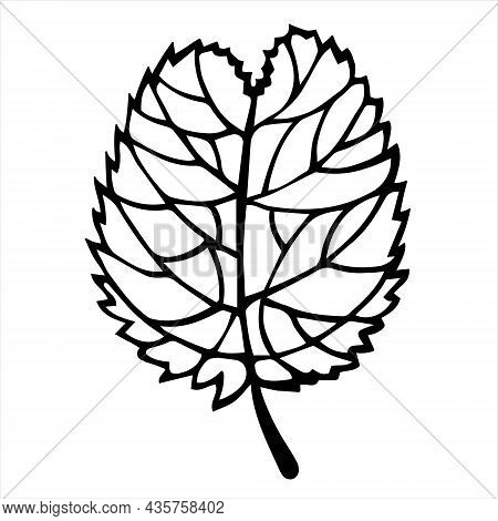 Alder Or Birch Leaf On A Petiole Vector Icon. Hand Drawn Doodle. Leaf Silhouette With Veins. Black A