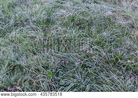 Fragment Of The Glade Overgrown With Different Undersized Grass Covered With Hoarfrost In Autumn Mor