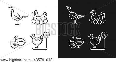 Domestic Hens Linear Icons Set For Dark And Light Mode. Female Birds. Turkey And Chicken. Brood Hen.