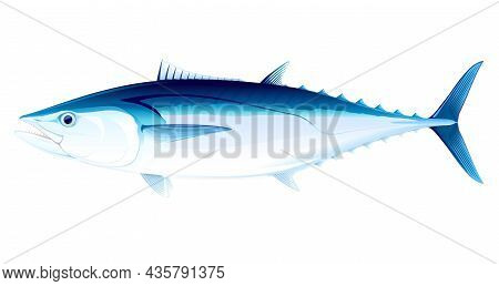 Dogtooth Tuna Fish In Side View Illustration